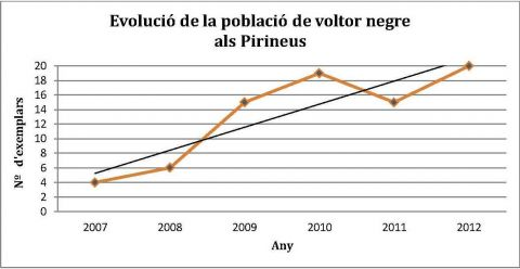 Population of black vulture in the Pyrenees
