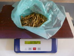 Peso total de las gomas extraidas de la cigüeña